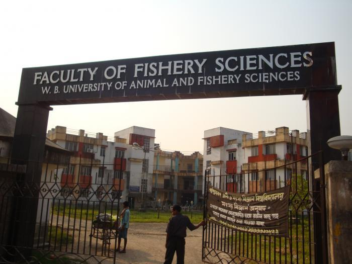 West Bengal University Of Animal And Fishery Sciences Kolkata